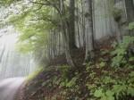 Waldstraße zum Tirolerkogel