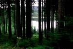 Am Waldweg beim Landstejn-Stausee