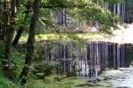 bb-spiegelung-waldteich-web-p3508