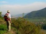 Der Weingartenbummler BB