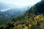 Ausblick vom Weingarten Stockkultur