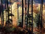 """Herbststimmung im """"hohen"""" Wienerwald"""