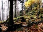 Blockflur im Wienerwald-Sandstein