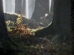 Uriger Wald im Kalkgraben