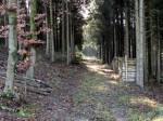 Waldstück am Hohenwarther Rundweg