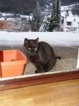 Blacky wartet auch auf Futter!