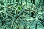 Ein letztes grünes Blättchen