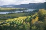 November-Weingärten bei Rossatz