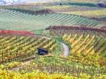 Weingärten im letzten Herbstlaub