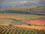 Weingärten am Seiberer