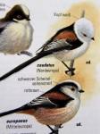 vogelbuch-schwanzmeisen-nordeuropa-web