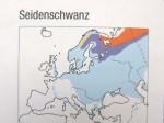 vogelbuch-verbreitung-seidenschwanz-web
