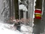 ab-buchenwald-mit-markierung-web-rscn8945