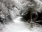 ab-im-fichtenjungwald-web-dscn8883