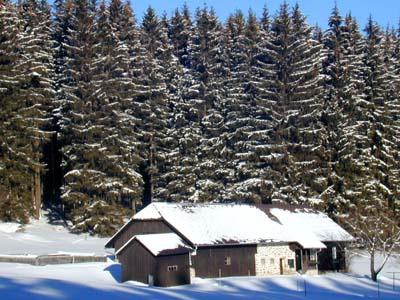typisches-waldhaus-am-barnkopf-web-dscn0427