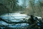 Winterlicher Auwald in Stopfenreuth