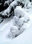 Kleiner Schneebär - oder ausdauerndster Wetterberichter?