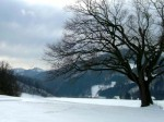 bb-naturdenkmal-mit-muckenkogel-web-rscn6811