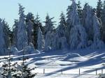 Schneemänner am Waldrand