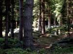 ab-hochwald-steiinernes-meer-web-dscn6778