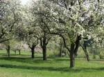 ab-obstgarten-almersberg-web-dscn9456