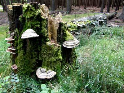 bb-naturwaldrest-web-p3657
