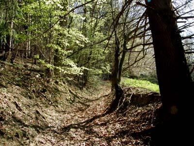 bbm-ochsenweg-hochedlerwald-web-p2550
