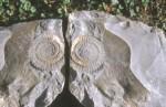 bb-ammonit-steingarten-web