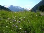 aa-hintermuhr-mit-tauernbergen-web-dscn0638