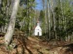 Frühling im Hochedlerwald