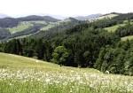 Bergwiesen im Kerschenbach