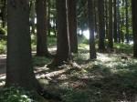 ab-pilzleerer-fichtenhochwald-web-dscn0302