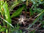 ab-spinnenfalle-web-rscn0303