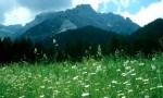 bb-larchenwiesen-bei-sexten-mit-dreischusterspitze-web