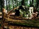 bb-urwaldige-schwarzgruberhohe-web-p4593