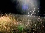 bb-waldlichtung-in-morgensonne-web-p4555