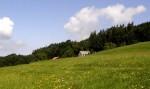 bb-wiesenwienerwald-grosoder-web