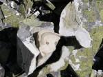 bb-gefaltete-gesteinsschichten-web-p4774
