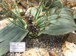 bb-wustenraritat-aus-namibia-web-p4698