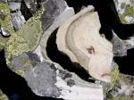 xbb-gesteinsfalte-speiereck-web-p4773