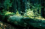 bb-alt-und-jung-im-urwald-web-scan182
