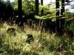 bb-herbstliche-urwaldlichtung-web-p5966