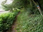 bb-wanderweg-neben-kamptalbahn-web-p5885