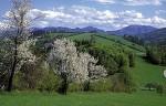 Vorfreude auf den Frühling