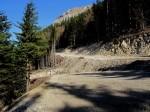 Waldsauwirtschaft