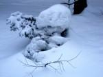 Fichtlein in Schneenot