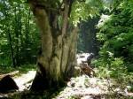 Bergwald der Ucka