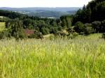 Hochfläche des Dunkelsteiner Waldes