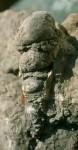 bb-fossil-im-wettersteinkalk-web-scan858