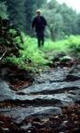 bb-mystikweg-tannwald-web